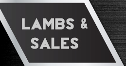 Lambs and Sales